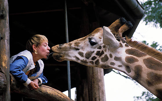 Kissing a Giraffe by Carl Purcell