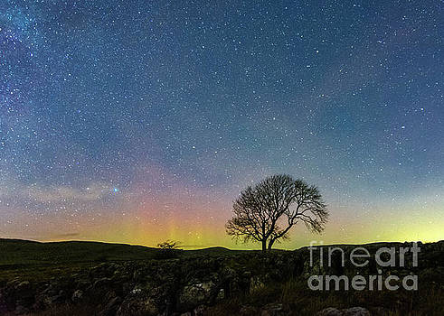 Lonely tree in Malham by Mariusz Talarek