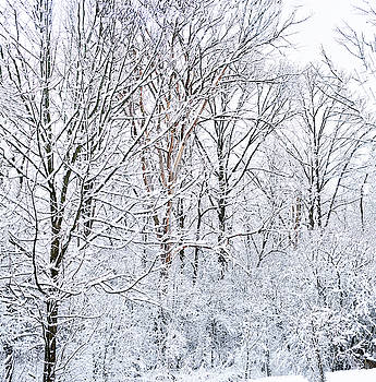 Winter Wonderland  by Nick Mares