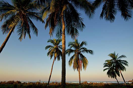 6 Palms by Nik West