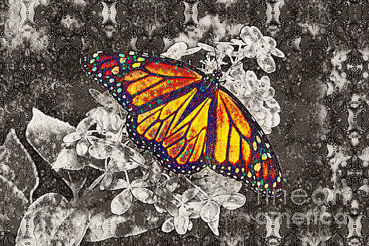 Monarch Butterfly by Lila Fisher-Wenzel