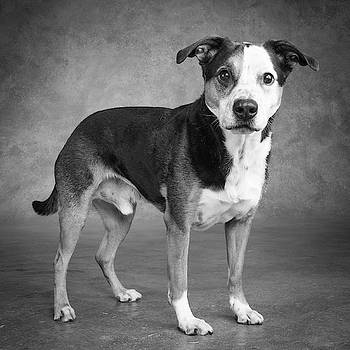 Portrait Of A Mixed Dog by Panoramic Images