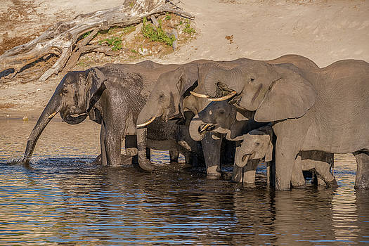 Africa, Botswana, Chobe National Park by Jaynes Gallery