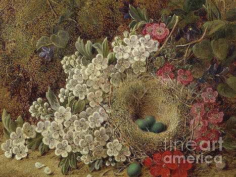 George Clare - A birds nest and blossom on a mossy bank