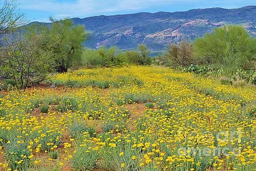 Janet Marie - A Blanket Of Wildflowers