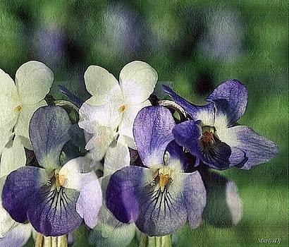 A bunch of violets by Marija Djedovic