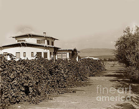 California Views Archives Mr Pat Hathaway Archives - A California residence showing Orange groves in hill at Eleter