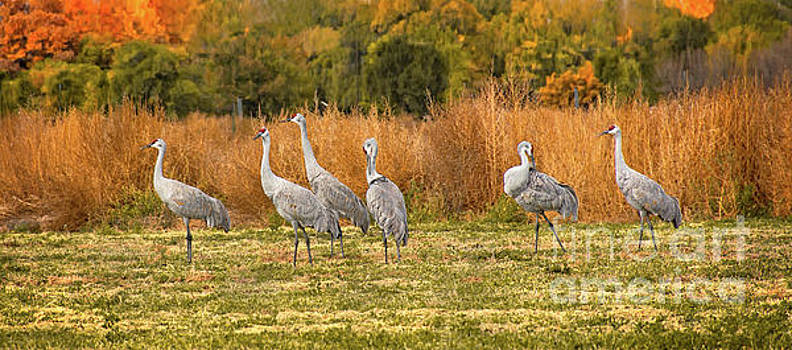 A Dance of Cranes by Susan Warren