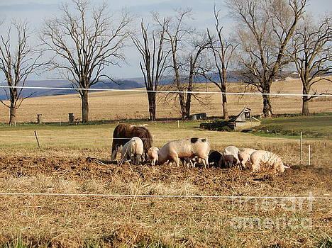 Christine Clark - A December Afternoon on a Pig Farm