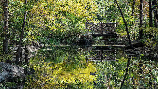 A Duck in Autumn Reflections by Cornelis Verwaal