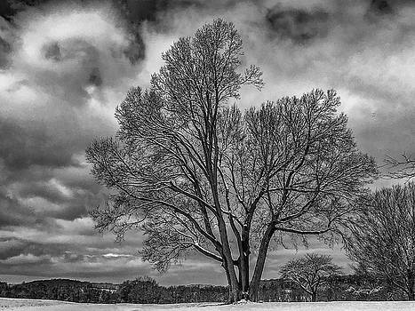A Favorite Tree by Jeff Oates Photography