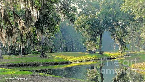 A Fine Southern Morning by Tami Quigley
