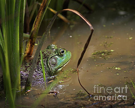 A Frog Waits by James Guilford