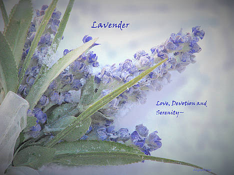 A Gift Of Lavender by Angela Davies