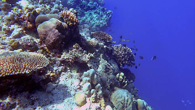 A healthy Tubbataha reef by Paul Ranky