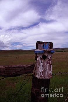 A little bird box by Jeff Swan