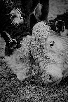 A Mooving Moment by Andrea Swiedler