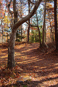 A Perfect Autumn Day In The Woods by Sharon Mayhak