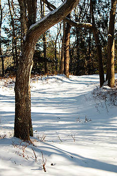 A Perfect Winter Day In The Woods by Sharon Mayhak