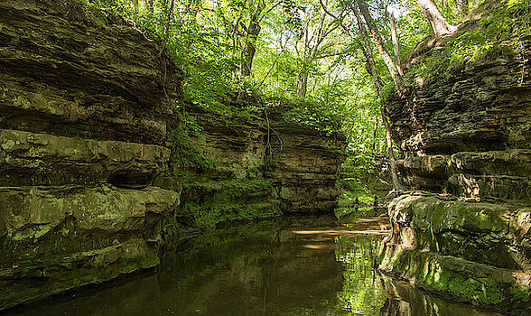 A River's Hidden Beauty by Traci Asaurus