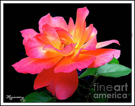 A Rose by Any Other Name...Would Still Be Beautiful by Mariarosa Rockefeller