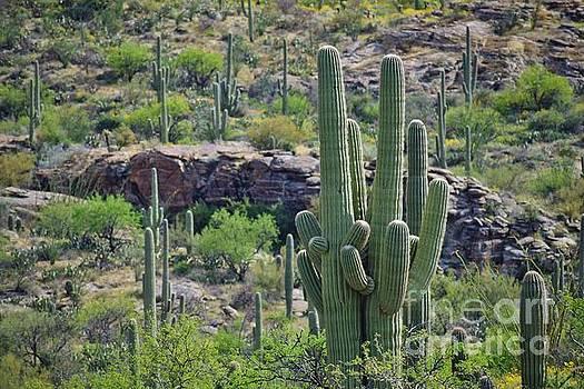 Janet Marie - A Saguaro Group Hug