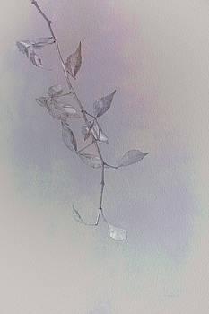 A Single Branch by Mitch Spence