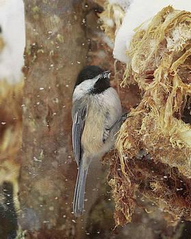 Susan Rissi Tregoning - A Snowy Chickadee
