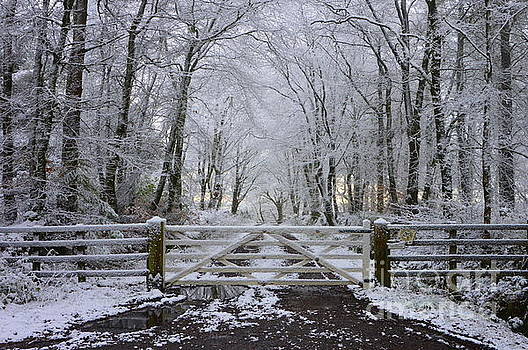 A Snowy Scene by Andy Thompson