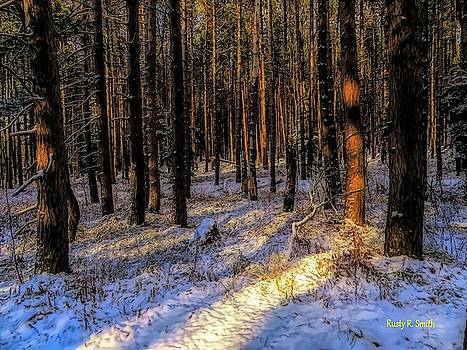 A stand of pines reflecting late afternoon sun. by Rusty R Smith