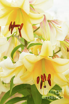A Tower of Lilies by Marilyn Cornwell
