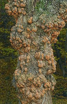 A Tree Trunk Version Of Skin Boils Or Zits by Bijan Pirnia
