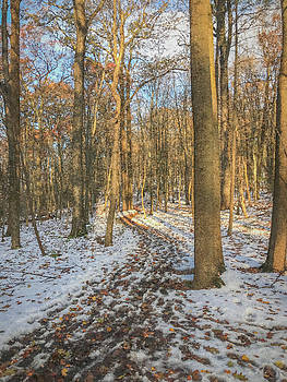 A Walk in the Woods by Jeff Oates Photography
