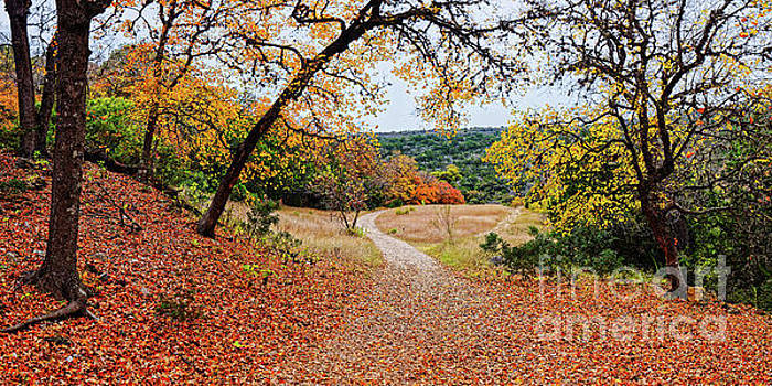 A Walk through the Maple Forest at Lost Maples State Natural Area - Vanderpool Texas Hill Country by Silvio Ligutti