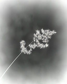 A Weed Sparkles by Mitch Spence