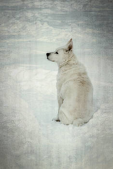 A White Dog in Snow by Guy Whiteley