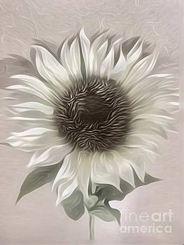 A White Sunflower by Jeannie Rhode