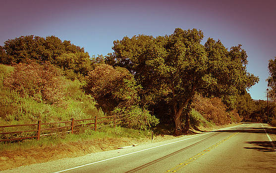 A winding road in ojai, green trees around in a warm yellow summ by Kim Vermaat