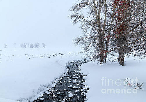 A Winter's Day - Yellowstone NP by Sandra Bronstein