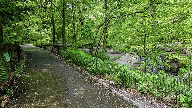 A Woodland Walk in Manhattan by Cornelis Verwaal