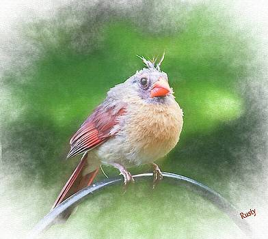 A young cardinal perching on a rail. by Rusty R Smith