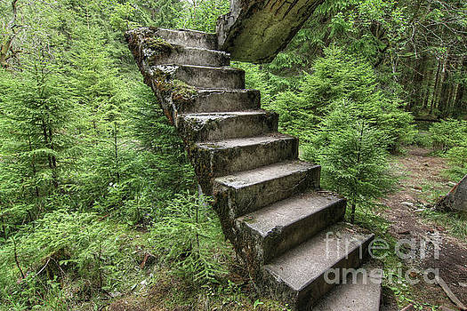 Abandoned rest of the concrete staircase in the woods by Michal Boubin