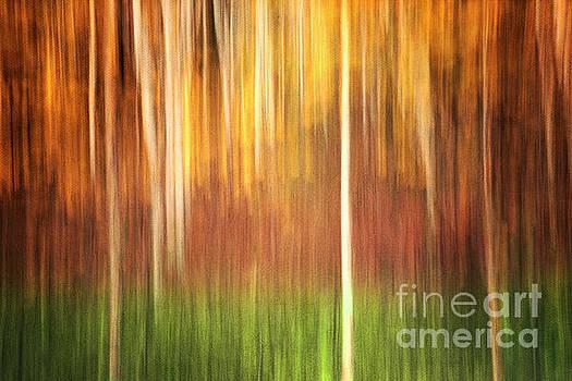 Abstract Autumn Forest by Priska Wettstein