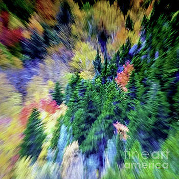Ricardos Creations - Abstract Forest Photography 5501d2