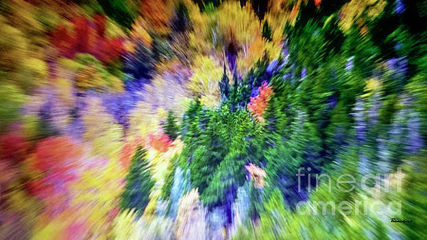 Ricardos Creations - Abstract Forest Photography 5501f1