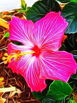 Abstract Hibiscus pink  by Mark J Dunn