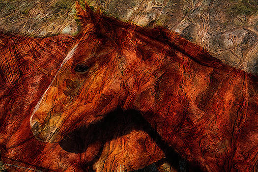 Abstract Horse Photograph by Fernando Margolles