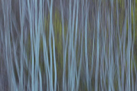 Abstract spring forest by Ulrich Kunst And Bettina Scheidulin