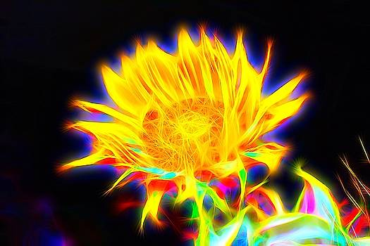 Abstract Sunflower  by Mark J Dunn