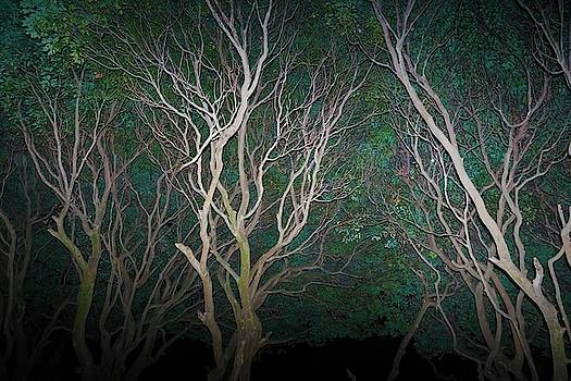 Abstract trees of the year by Kumud Parajuli